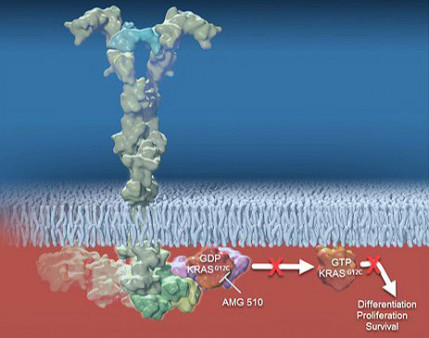 First Kras Targeted Therapy Shows Promise For Lung And Colon Cancer Cancer Health