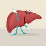 happy liver illustration
